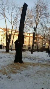 Kraljevo 01 - Stabla u parku